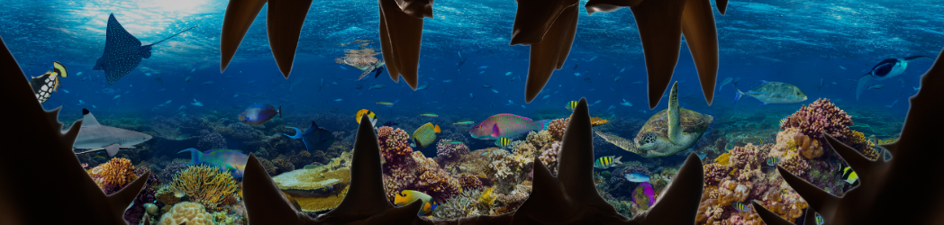 Sight of coral reefs with shark teeth outline